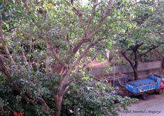 Greenery in Mumbai
