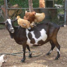 Farm life....