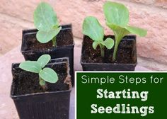 Seed Starting :: Five Little Homesteaders