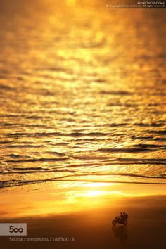 The Taste of Freedom by jankovoy  Asia Goa India Maharashtra adventure bike freedom motorcycle ocean ride sea sun sunset travel waves