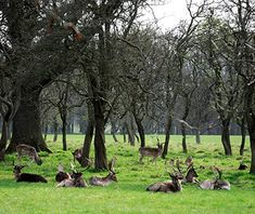 Dublin, Ireland: Hundreds of wild deer roam the charming lake at the Furry Glen and the pond at Phoenix Park, which covers more than 1,700 acres—a mix of gardens and wide-open spaces—to the west of the city center. Animals are indeed the main attraction at the park, which has hosted the Dublin Zoo since 1831. Other attractions include the 15th-century Ashtown Castle and Victorian tearooms.