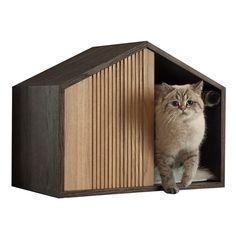 New cats house ideas shelters 16 Ideas Kitten Breeds, Cat Fountain, Grey Kitten, Super Cat, Pet Furniture, Pet Peeves, Cat Sleeping, Diy Stuffed Animals, Cat Toys