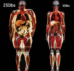 Body scans of 250 lbs. vs. 120 lbs.