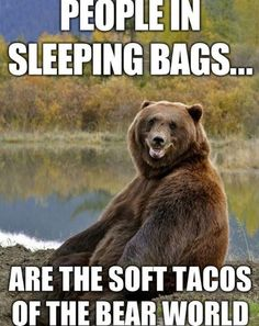 Un-Bear-Ably Silly And Ridiculous Bear Memes (26 Memes) - I Can Has Cheezburger? Funny Camping Pictures, Funny Bear Pictures, Funniest Pictures, Funny Pics, Funny Stuff, Hilarious, Animal Pictures, Animal Memes Clean, Funny Animal Memes