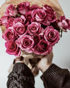 Beautiful dark pink roses