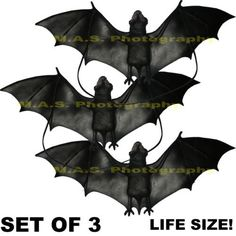 HALLOWEEN BAT SCARY BLACK PARTY SEASONAL PROP DECOR DECORATION  SET OF 3 *** Click on the image for additional details.