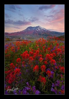 Mt Saint Helens with wildflowers by Ryan Dyar.