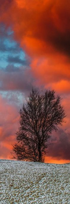 amazing sunset #tree sky landscape red amazing nature clouds formation #Explore emanuelezallocco photos on Flickr #Il Tramonto e l'Inverno Foto von emanuelezallocco von Flickr
