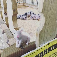 Matilda ran into some cousins at the Youth Fair.