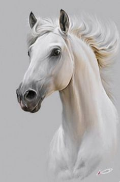 Horse by irudd on DeviantArt - Pferd Horse Drawings, Animal Drawings, Art Drawings, Horse Head Drawing, Drawing Animals, Graphite Drawings, Pencil Drawings, Painted Horses, Cross Paintings