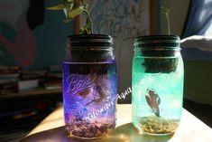 All Year-Round Mason Jar Fish Garden Quart by GlowaveAquaponics