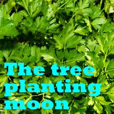 Moon in Taurus Productive and earthy, Taurus is one of my favourite places for the moon to be when gardening. Taurus is especially good for planting root crops and leafy greens because it lends the qualities of endurance and robustness to crops planted under its beams.