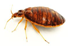 Roaches and Bed Bugs Treatment service in Suffolk -  Residential and Office services - Pest Control - Roaches and Bed Bugs. The experts at Pestout  eliminate your roach infestation. Traps them and Remove them completely.