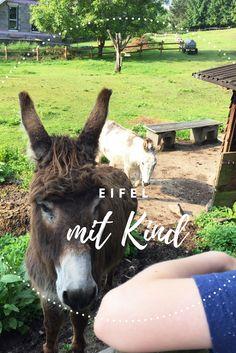 Tipps und Ausflugsziele im Nationalpark Eifel mit Kind. #Eifel