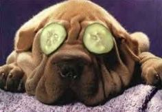 Animals relaxing pictures – A Selection of Pins about Animals Funny Animal Pictures, Funny Animals, Cute Animals, Humorous Pictures, Sleeping Kitten, Sleeping Dogs, Cute Puppies, Dogs And Puppies, Doggies