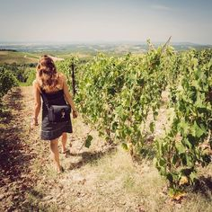 The ancient vineyards of Castello Di Brolio in Chianti. What a beautiful place to take a stroll.
