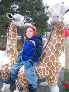 Como Zoo in the Winter | Family Fun Twin Cities