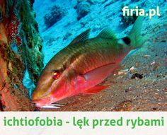ichtiofobia - nie bój się ryb! www.firia.pl