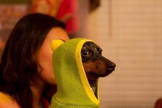 Dogs in a hood…
