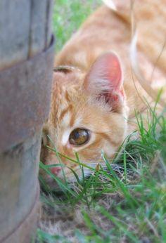 Ollie cat .....by Heidi Carroll