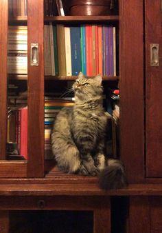 Violeta e os livros...