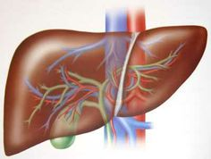 Care of the #Liver in #Ayurveda : The liver has a fiery energy and can cause a variety of Pitta disorders, such as inflammation and infection. http://www.vopecpharma.com/Spoonful-of-Herbs-for-Liver-Protection.aspx