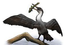NewlyDiscovered(PrehistoricBird) :Tingmiatornis artica,lived near balmy North Pole