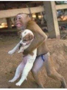 Monkey saves a dog