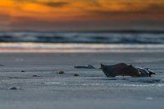 #goodmorning @cpeeblesphoto  Good morning  #staugsocial #staugustine #staugustinebuzz #staugustinerecord #sony #a7rii #explore #home #historicfirstcoast #iloveflorida #goodmorning #gatornationiseverywhere #sony #thecommunitysunrise #moodygram #portrait #celebrationcreative #wanderfolk #ocean #beach @staugustinebuzz