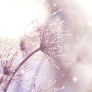 Halálunk után még 49 napig élünk. Hogy miért? Nem hiszed el az okát - Blikk Rúzs Dandelion, Flowers, Plants, Dandelions, Plant, Taraxacum Officinale, Royal Icing Flowers, Flower, Florals