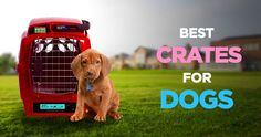 Best Dog Crates: Creating a Safe Haven for Your Pooch http://peanutpaws.com/best-dog-crates/  #dogs #crate #doghouse #crates #kennel #doglovers #petcare #dog #doghealth