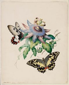 Helena ScottButterflies and Passionflower 1854