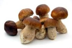 Porcini-Mushrooms-Native-To-Italy