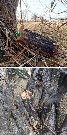 """""""Wood"""" you notice it? Brain Training, Geocaching, Bison, Personality Types, Tube, Wood, Creative, Woodwind Instrument, Timber Wood"""