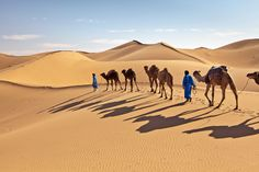 Travel deep into the desert by camel. Image by Frans Lemmens / The Image Bank / Getty - Provided by Lonely Planet