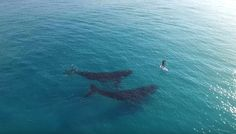 Rare Whale Duo Gets Friendly With Lucky Paddleboarder | HuffPost