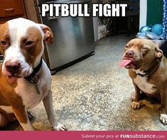 Pit bull fight, I know I've pinned this once,but it's so funny it bears pinning twice.