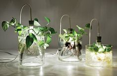 vase light plant