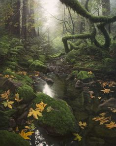 The Noiseless Wood Adair Payne