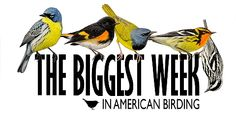 The Biggest Week In American Birding 2013