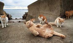 Photographer records the reality of Fukuoka, an island dominated by cats.