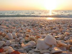 """Beach near Corpus Christi, Texas..."""" Little seashells left all alone,  Put them in your pocket and take them home."""""""