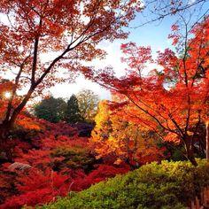 Kyoto 東福寺 #Padgram