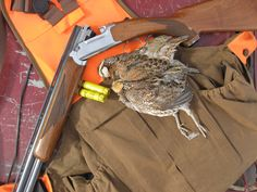 Quail Hunting - the best!