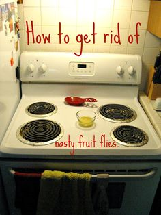 How to lure in fruit flies for the kill using apple cider vinegar, dish soap, and a light. Those things are impossible to get rid of. I definitely need to remember this next time they come into my house.