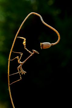 I love Preying Mantis and Walking stick insects. Isn't nature wonderful.