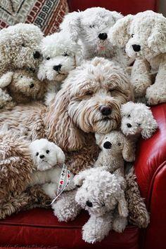 """""""Con tantos regalos ya no encuentro al #perro"""" ;)  Entra a www.perroverdeygatonegro.com - #tiendaonline de productos originales y de calidad para perros y gatos"""