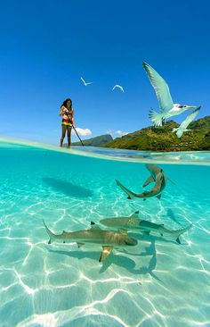 a girl paddle boarding with sharks in the crystal clear waters of French Polynesia. Photo by Chris Mclennan (summer sun paddle boarding) Under The Water, Surfing Lifestyle, Wind Surf, Surf Fishing, Fauna Marina, Shark Photos, Reef Shark, Shark Bait, Shark Shark