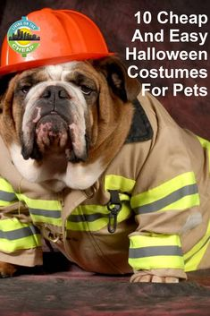 Perhaps your pet is participating in a Halloween parade. Or maybe she's strutting her fluff at a mutt masquerade. Whether it's for an event or just a fun family photo in the living room, sometimes pets allow you to dress them up. Cheap Halloween Costumes, Diy Halloween Decorations, Fun Family Photos, Easy Pets, Cheap Pets, Halloween Parade, Diy Dog Treats, Pet Travel, Dog Toys