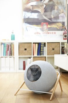 Classy furniture for discerning cat! Mobilier chic pour chat exigeant!